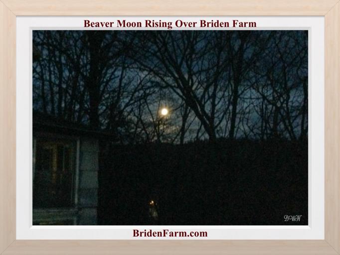 Beaver Moon Rising Over Biden Farm