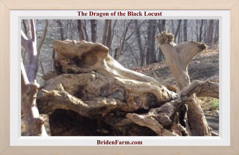The Dragon of the Black Locust
