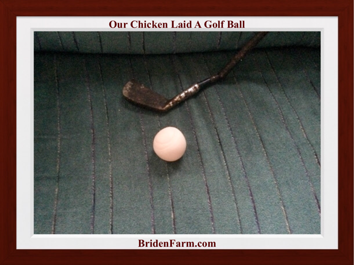 Our Chicken Laid a Golf Ball