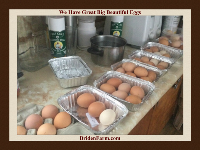 We Have Great Big Beautiful Eggs