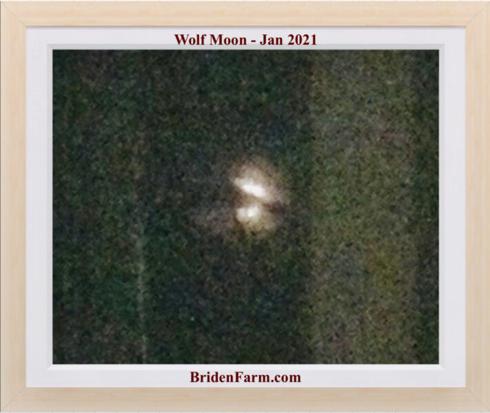 The Wolf Moon Passed Over Briden Farm