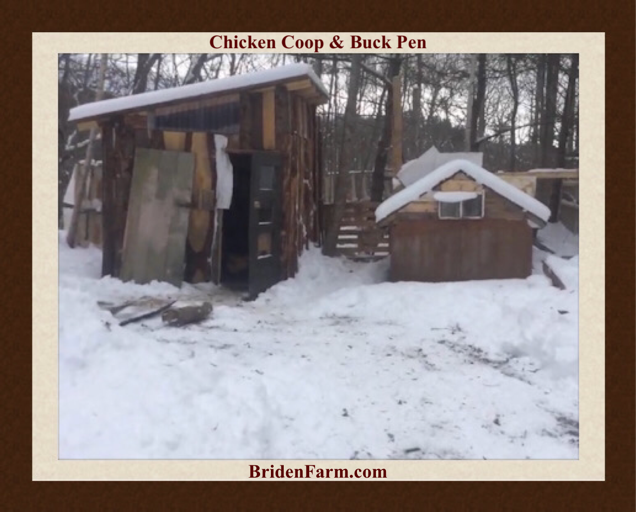 Chicken Coop & Buck Pen