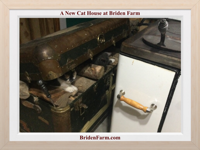 A New Cat House at Briden Farm
