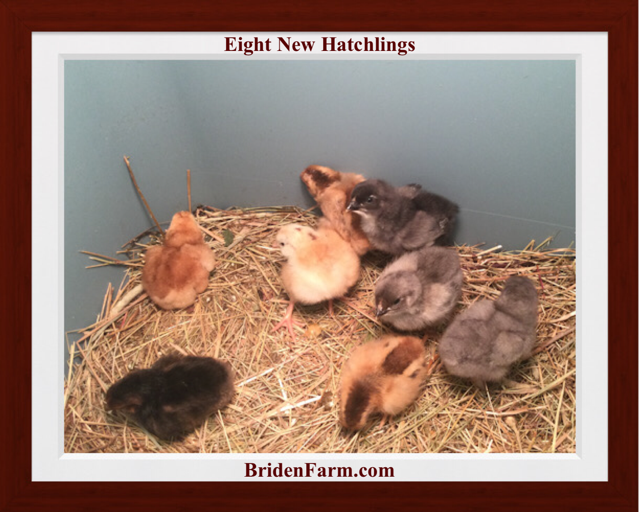 Eight New Hatchings