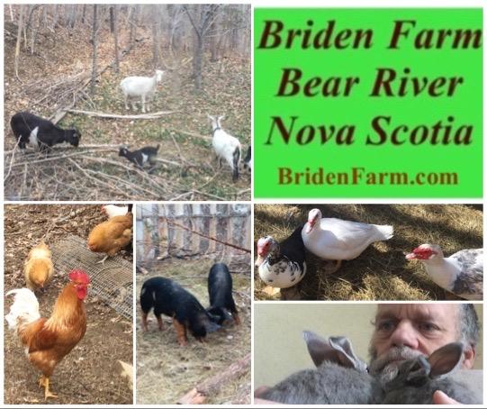 Briden Farm