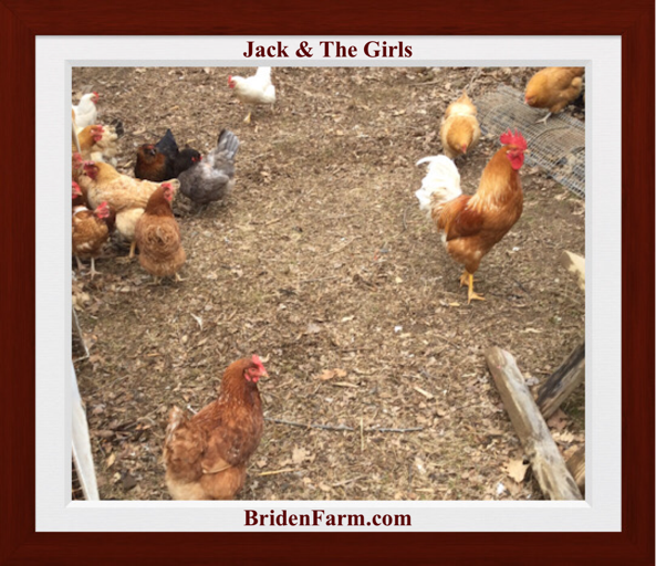Jack & The Girls
