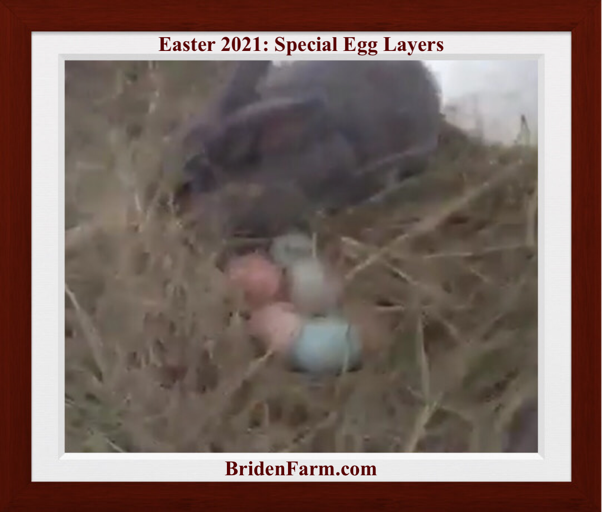 Easter 2021 Special Egg Layers