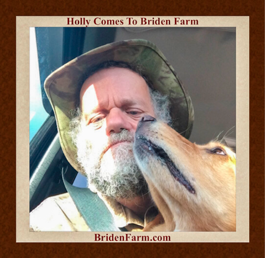 Holly Come To Briden Farm